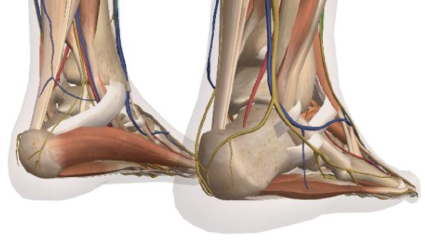足の裏の痛みの図解